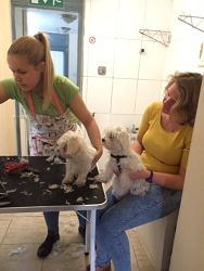Dog grooming london grooming services for dogs professional dog groom london solutioingenieria Image collections